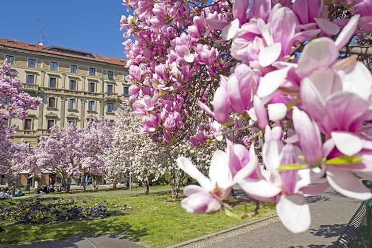 Tredesin de Marz: i fiori, S.Barnaba, la primavera